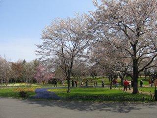 桜の下の花