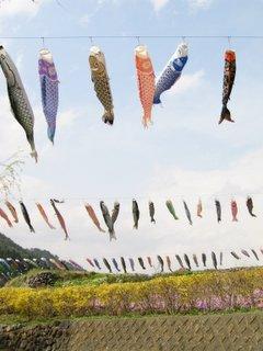 空を見上げると鯉のぼり