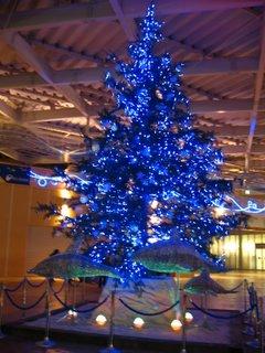 新江ノ島水族館入り口のツリー(夜)