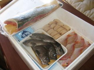 お魚が届いた!