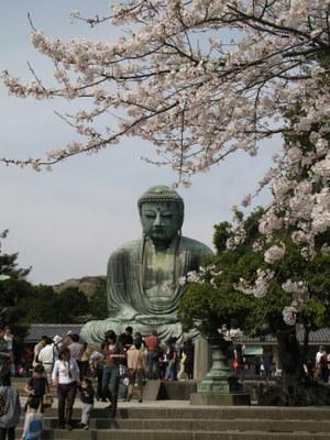 桜と鎌倉大仏