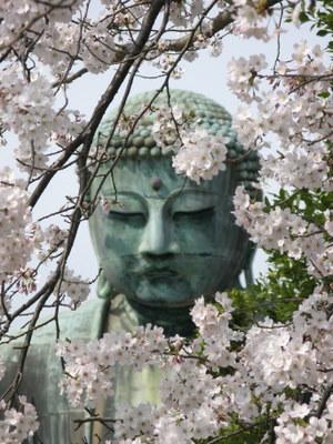 桜フレームの大仏