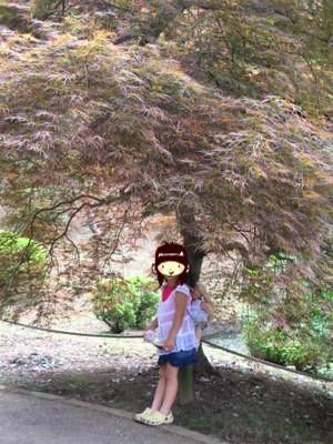 もみじの木の下