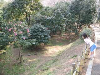 椿林を眺める