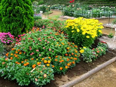 ダリア以外の花の花壇