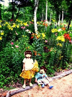 林の中の白樺ゆり園