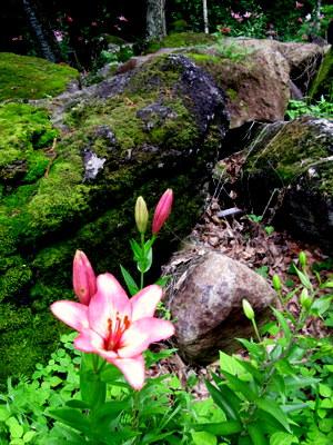 白樺ゆり園3