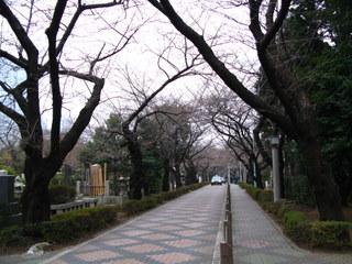 青山霊園2