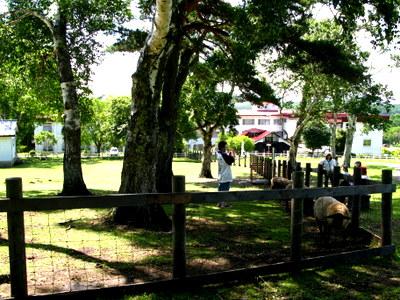 羊と山羊のコーナー