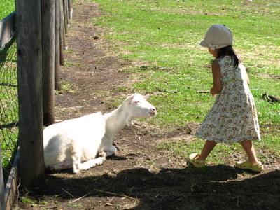 アンと山羊