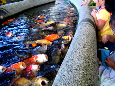 これも淡水魚