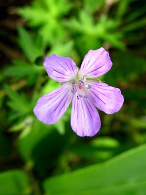 高原の花1