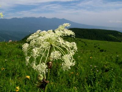 高原の花4