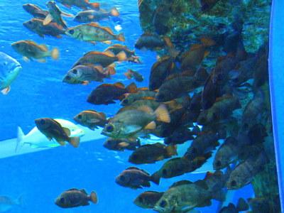 日本海の水槽