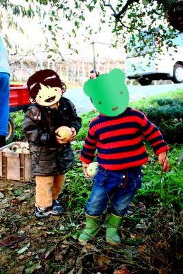 りんご採れたよ!