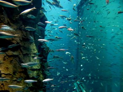 流れに乗る魚