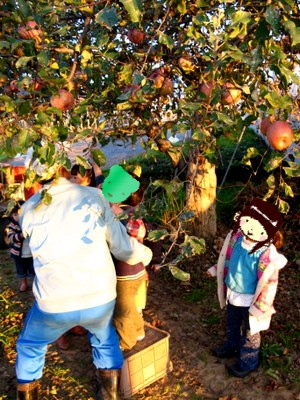 いっぱいのりんご