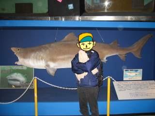 大昔のサメ