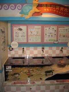 ウミガメ水槽1