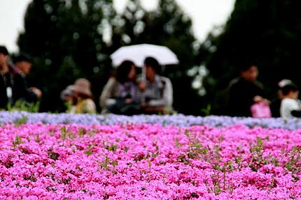 芝桜を楽しむ人々