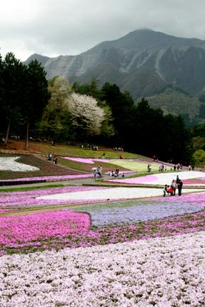 芝桜と秩父の山