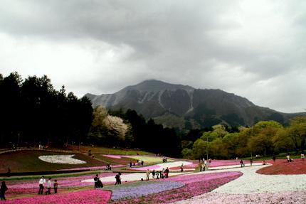 芝桜と秩父の山2