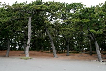 三保の松林