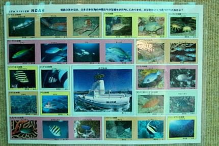 海中遊覧で出逢える魚たち
