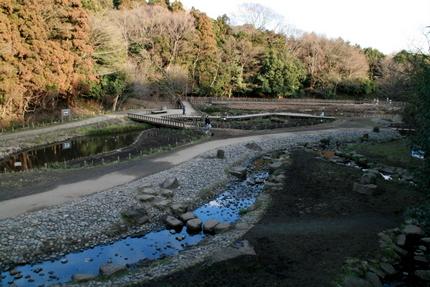 泉の森の湿性植物園