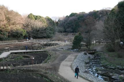 湿性植物園2