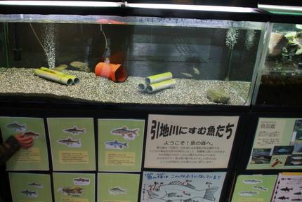 大和市自然観察センター内の水槽