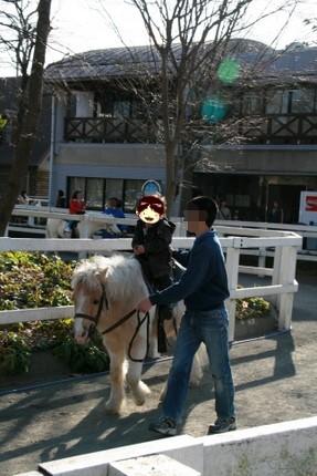 ポニーに乗馬