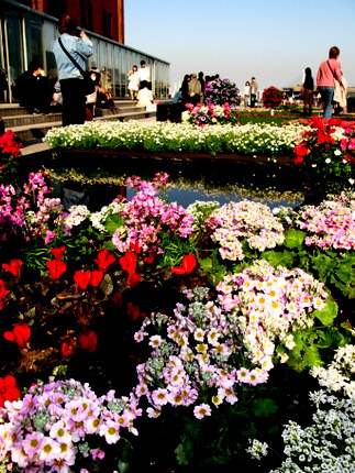 水と巨大花壇 2