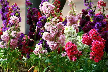巨大花壇の花のアップ