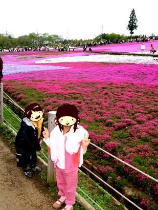 羊山公園の芝桜1