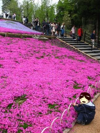 芝桜を前に座り込むレオ