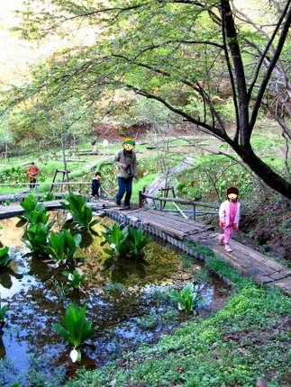 水芭蕉園②