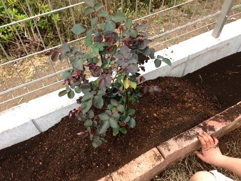 花壇作ります