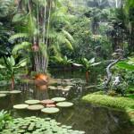世界遺産!!150年以上の歴史ある植物園